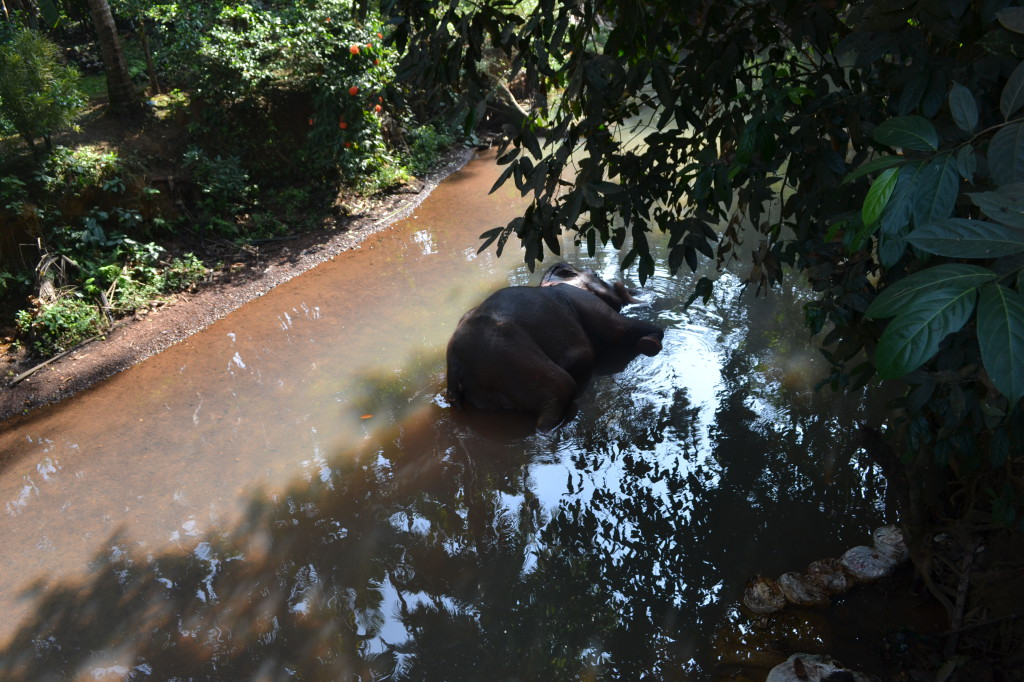 Слон устал