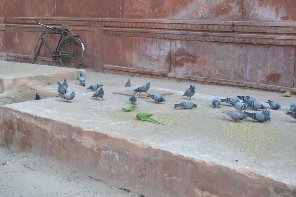 Попугаи и голуби