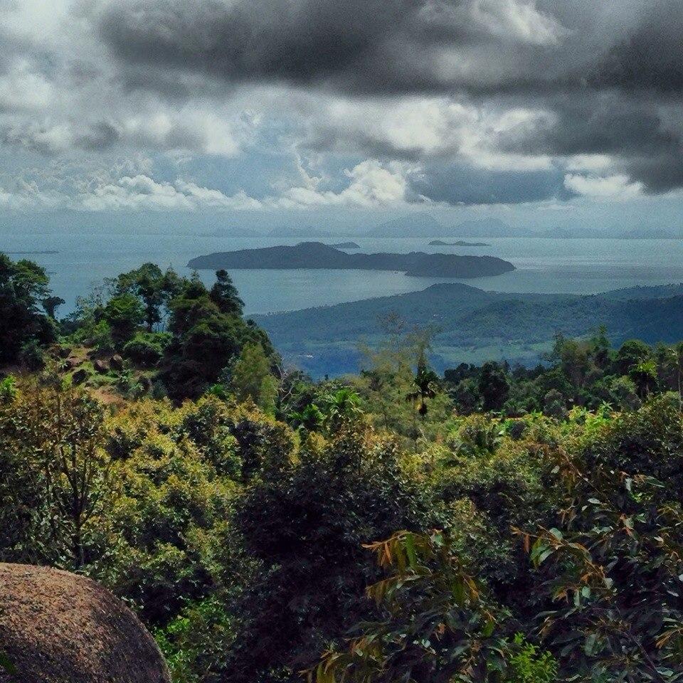Вид из джунглей