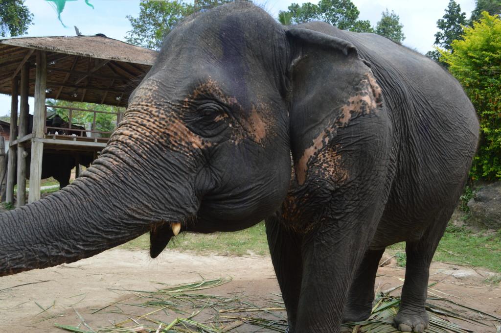 Слон, на котором мы катались