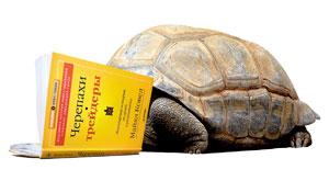Черепахи-трейдеры