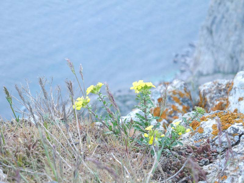 Растительность в Крыму