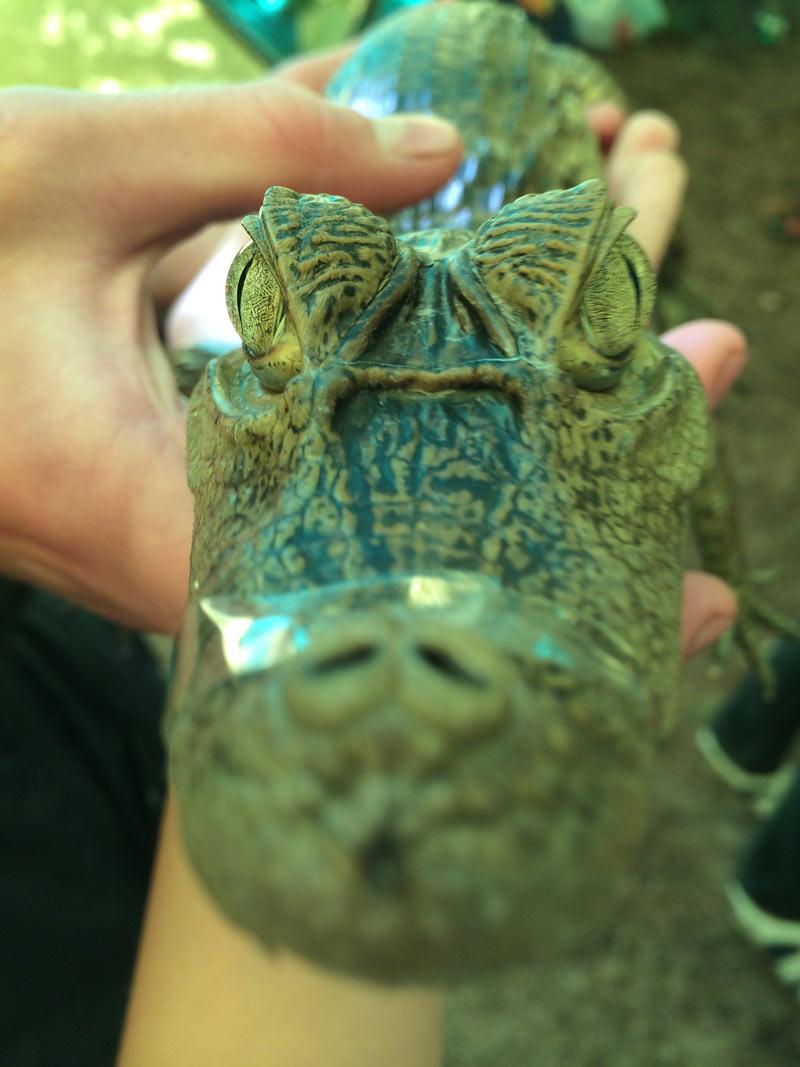 Крокодил пахнет рыбой